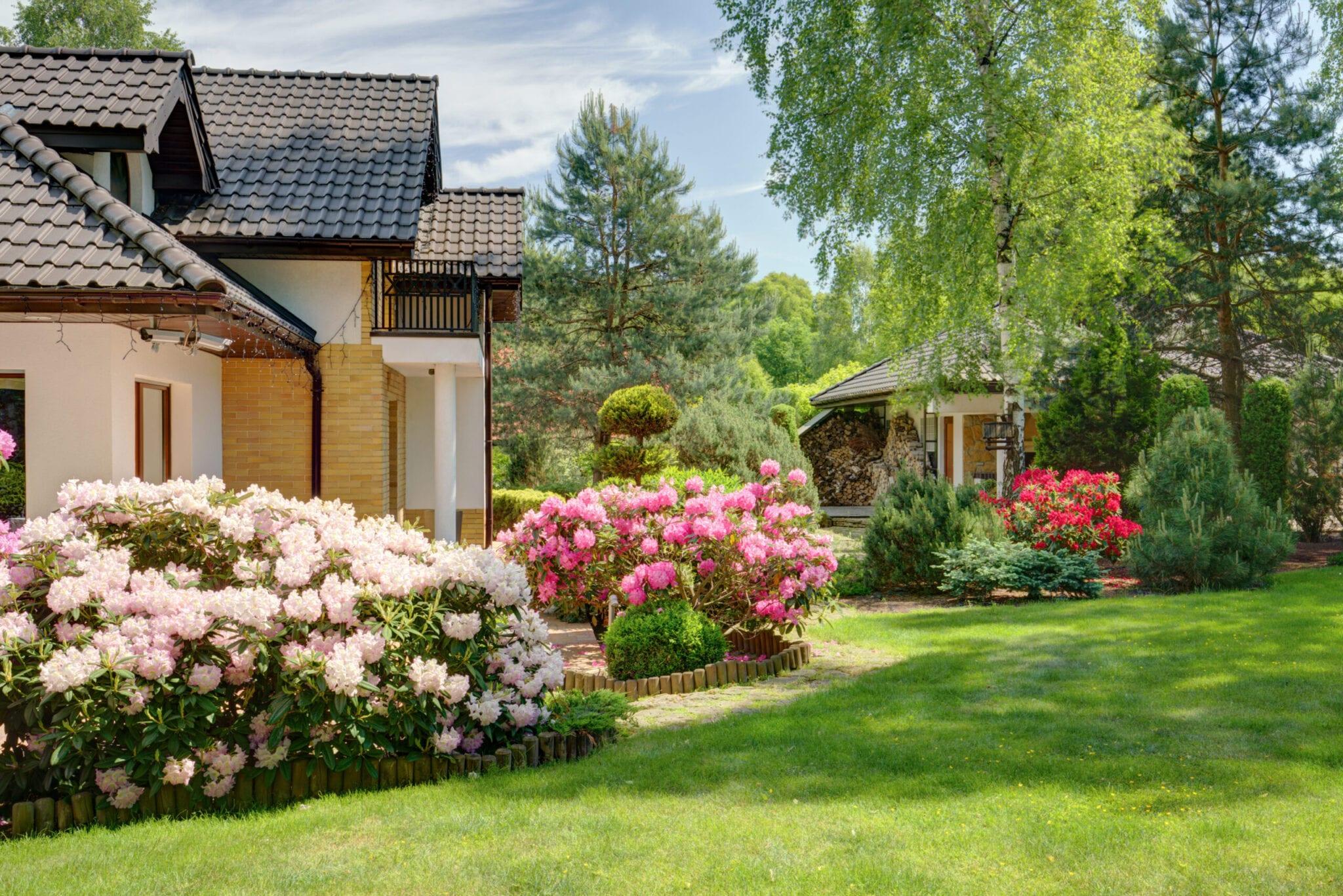 Beauty spring-flowering shrubs